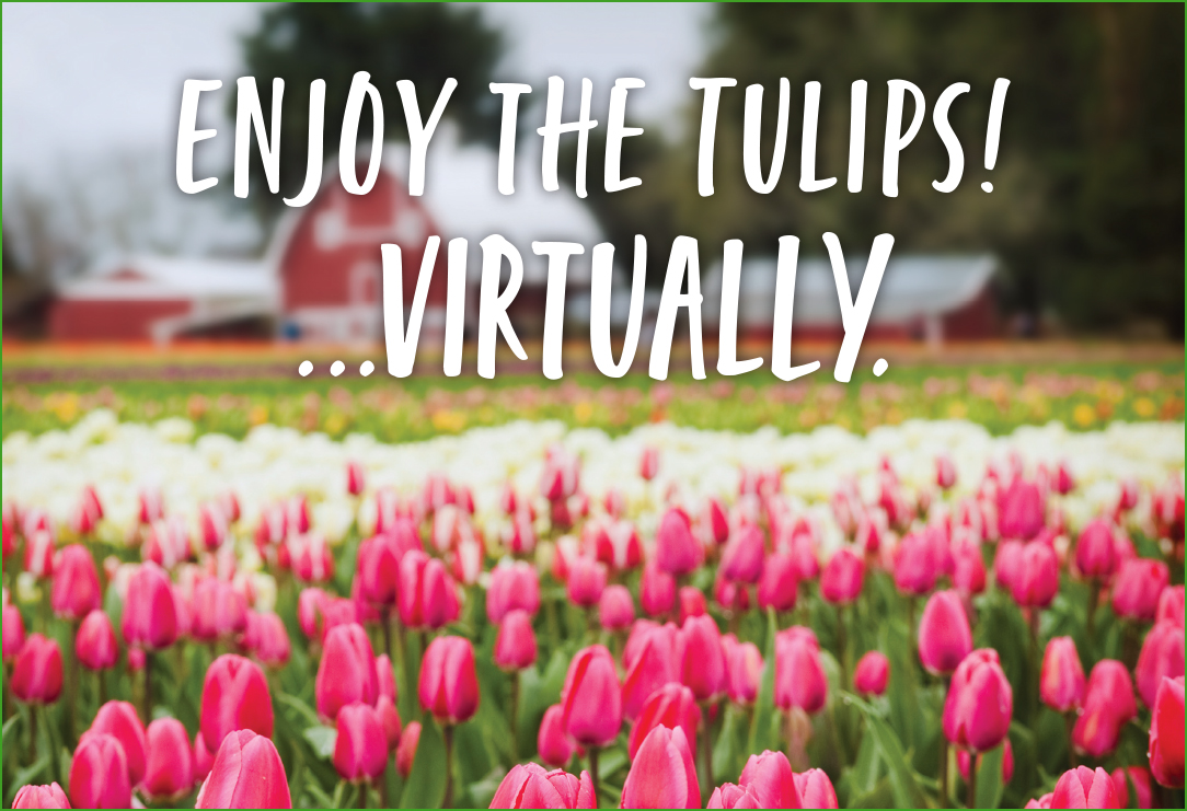 Image of Tulips with the text Enjoy the tulips...virtually